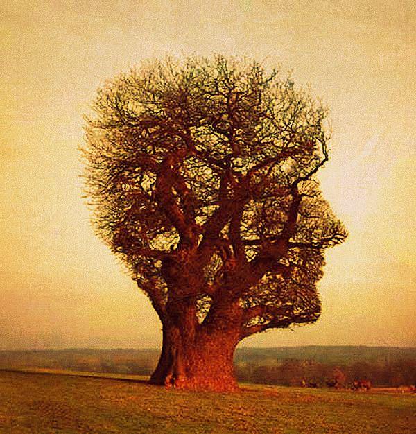 herman-hesse-trees