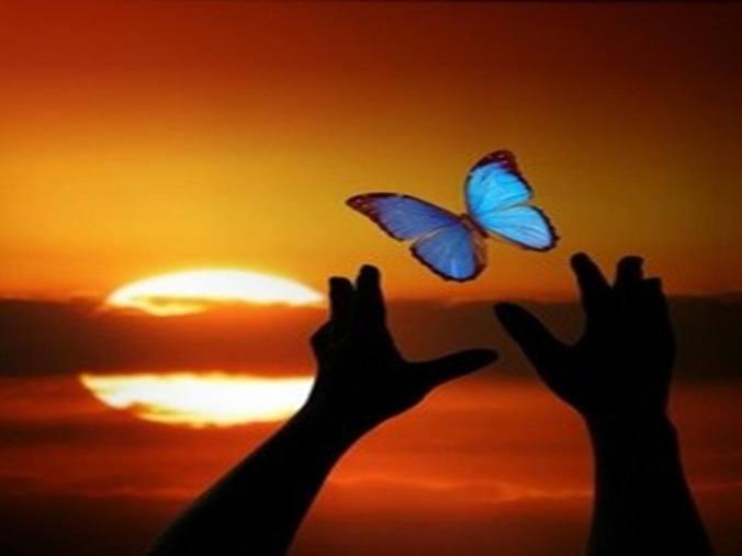 ImAGE envol papillon