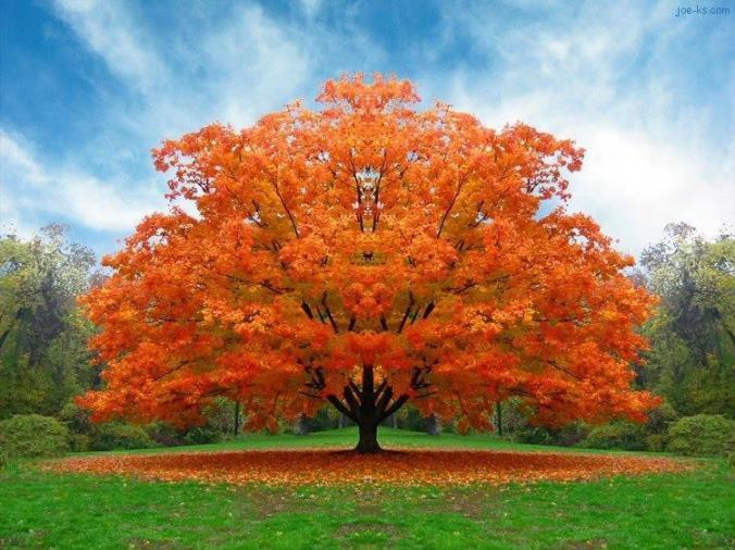 arbre homme automne