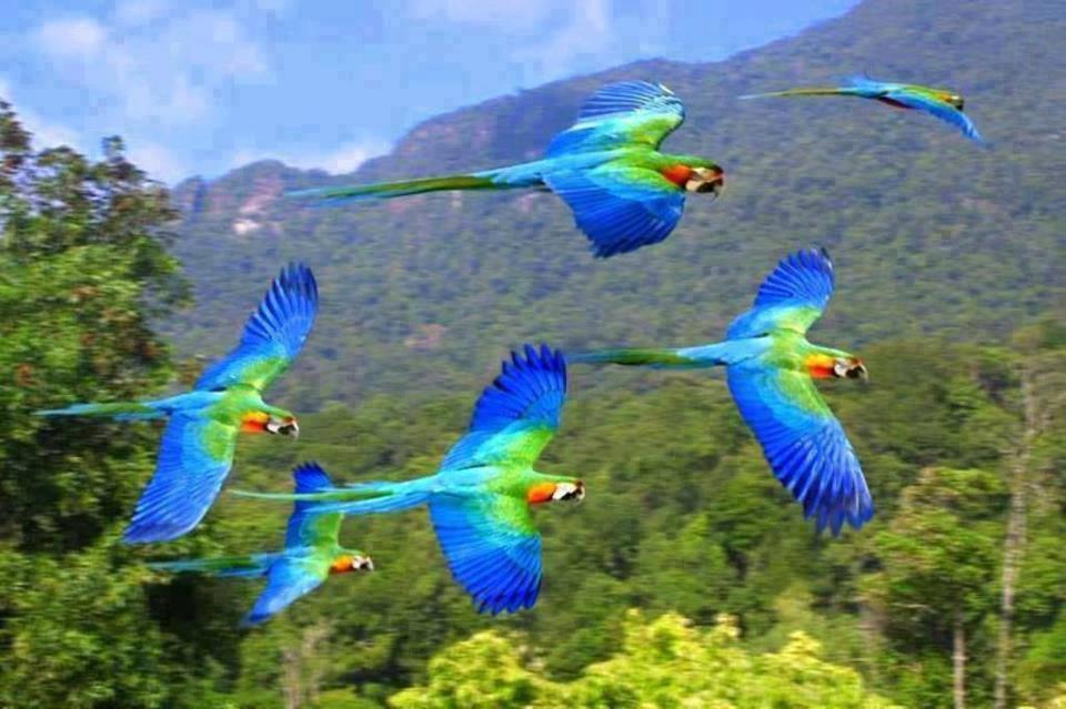 ImAGE oiseaux