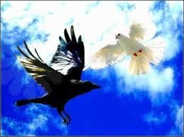 oiseau-noir-et-oiseau-blanc