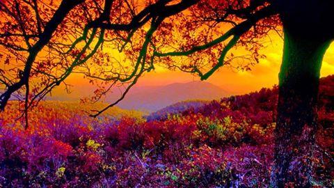 ImAGe forêt couleurs