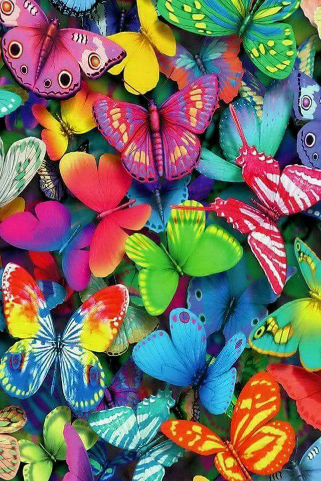 ImAGE papillons