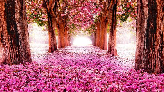 ImAGE chemin de fleurs