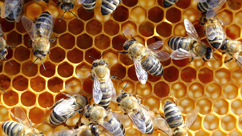 fable-des-abeilles-792x446