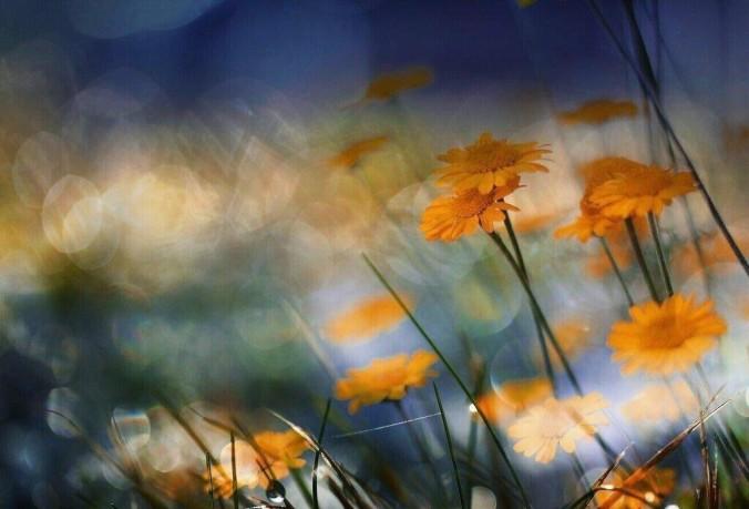 ImAGE fleurs 2