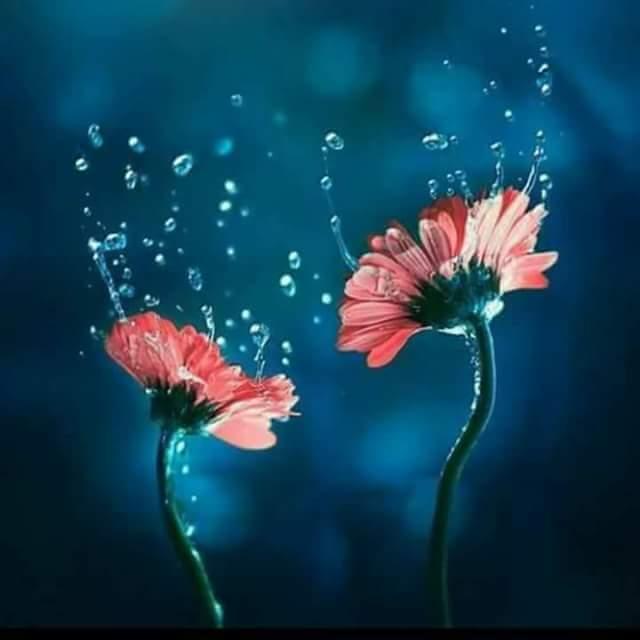 ImAGE Fleurs