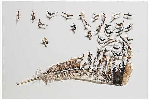 ImAGE plumes envol