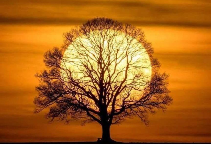 cropped-image-soleil-arbre.jpg
