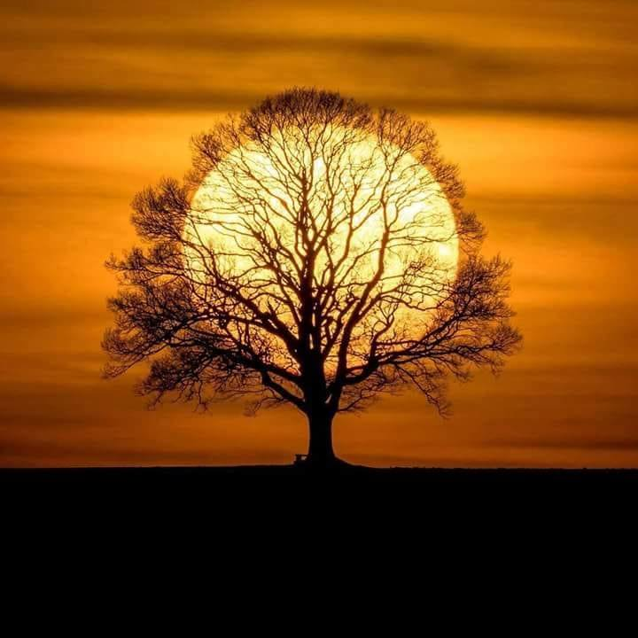 ImAGE soleil arbre
